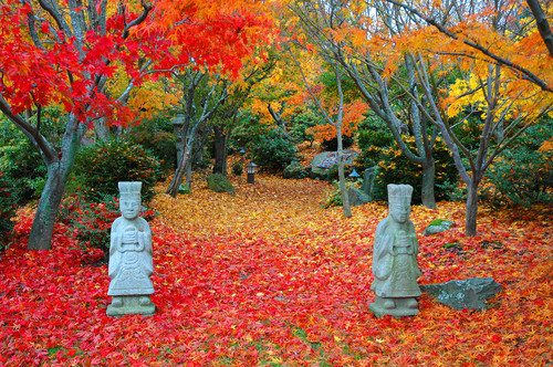 cropped-asiatique-jardin.jpg